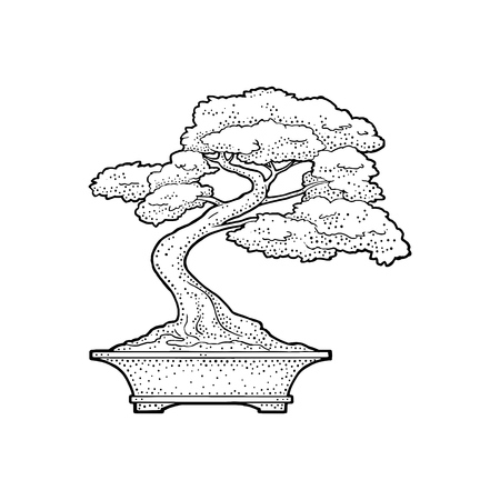 Illustrazione per Bonsai tree in pot, Vintage black vector engraving illustration Isolated on white background. Hand drawn design element - Immagini Royalty Free