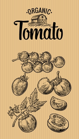 Illustration for Set of hand drawn tomatoes on brown background. Tomato, half, slice. Vintage vector engraving illustration for logotype, label, poster, corporate identity, badges, presentations for organic farm. - Royalty Free Image