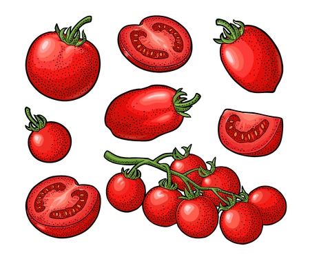 Illustration for Set of hand drawn tomatoes. Branch, whole and slice. - Royalty Free Image