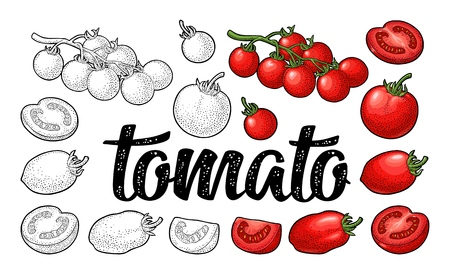 Illustration for Set of hand drawn tomatoes and calligraphic lettering isolated on white background. Branch, whole, half and slice. Vector engraving vintage color illustration. - Royalty Free Image