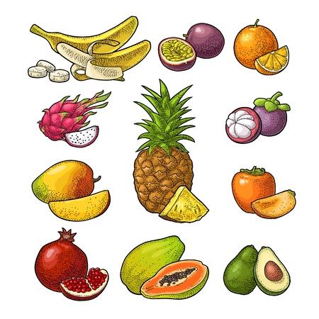 Ilustración de Set fruits isolated on white background. Vector color hand drawn vintage engraving - Imagen libre de derechos