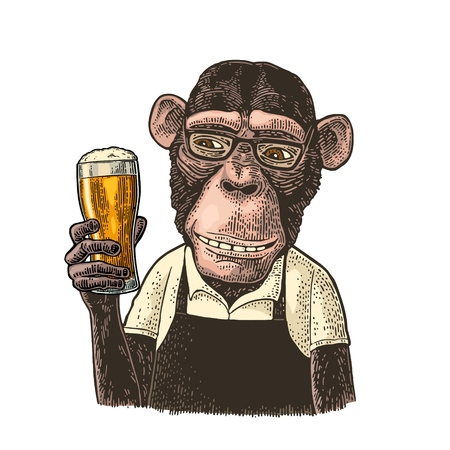 Illustration for Monkeys fast food worker dressed in apron holding glass of beer. Vintage color engraving illustration. Isolated on white background. Hand drawn design element for poster and t-shirt - Royalty Free Image