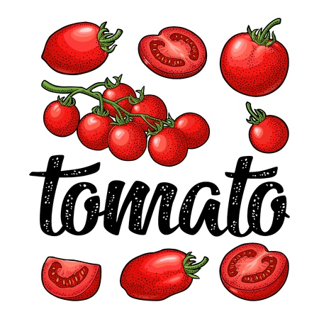 Illustration for Set of hand drawn tomatoes and calligraphic lettering. Engraving vintage - Royalty Free Image