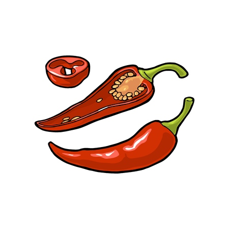 Illustration for Chilli whole, half and slice. Vector vintage color and black engraving illustration. Isolated on white background. Hand drawn design element for label, menu and poster - Royalty Free Image