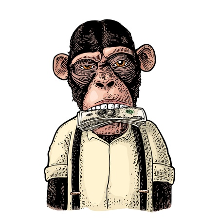 Illustration for Monkeys with money on mouth. Vintage color engraving illustration for poster, web, t-shirt, tattoo. Isolated on white background - Royalty Free Image