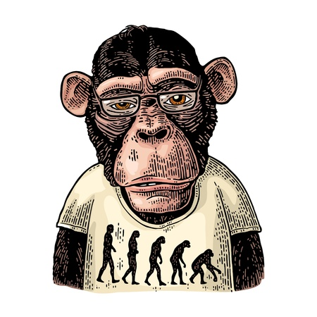 Illustration for Monkeys dressed in a T-shirt with the theory of evolution on the contrary. - Royalty Free Image