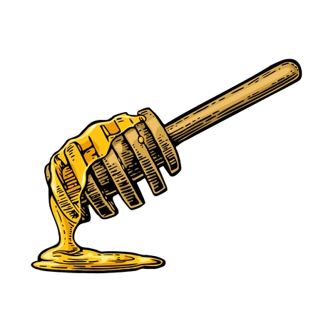 Ilustración de Honey dripping from wooden stick. Vintage color engraved illustration. Hand drawn sketch isolated on white background. - Imagen libre de derechos