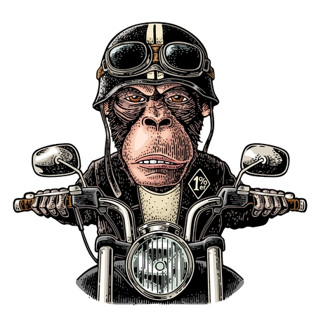Illustration for Monkey in the helmet and glasses driving a motorcycle rides. Vector hand drawn color vintage engraving. Isolated on white background. For poster and t-shirt biker club - Royalty Free Image