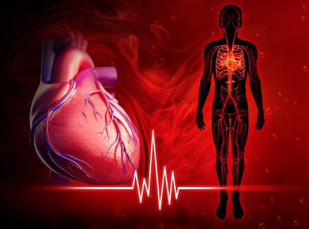 Foto de Illustration of human heart beat diagram - Imagen libre de derechos
