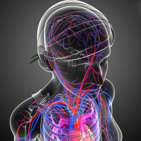 Foto per Illustration of brain circulatory system - Immagine Royalty Free