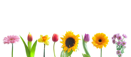 Photo pour Spring flowers in a row - image libre de droit