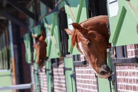 Photo pour Closeup on Horses in the stables with heads outside - image libre de droit