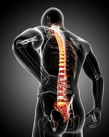 Foto de back pain anatomy - Imagen libre de derechos