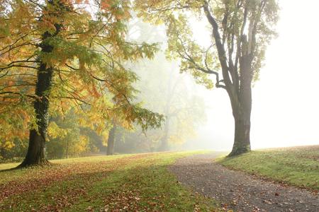 Foto de Roadside trees in the park on a foggy day in autumn before the sun comes out - Imagen libre de derechos