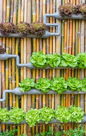 Foto de Organic hydroponic vegetables Vertical garden - Imagen libre de derechos