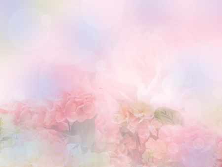 Foto de sweet color hydrangea flower with soft style - Imagen libre de derechos