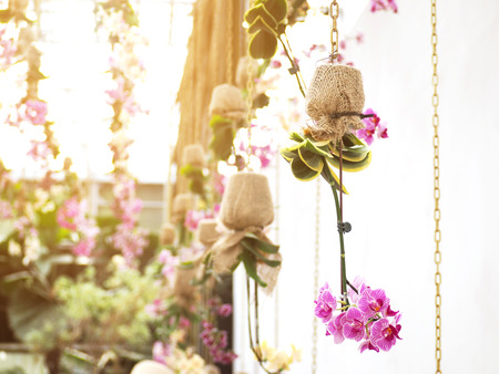 Photo for Purple orchids in flower pot wrapping by burlap hanging over white wall. Spa or wedding party decorated by nature. - Royalty Free Image