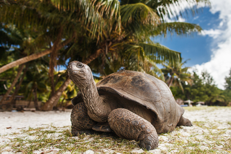 Photo for Seychelles. Giant tortoise on Curieuse Island - Royalty Free Image