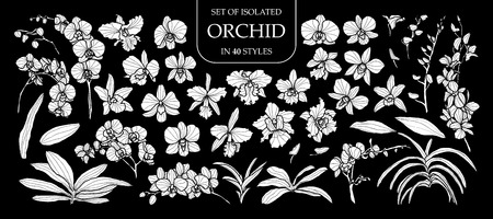 Ilustración de Set of isolated white silhouette orchid in 40 styles .Cute hand drawn flower vector illustration in white plane and no outline on black background. - Imagen libre de derechos