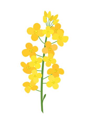 Ilustración de Flowering stalk of yellow rape flowers. Wild field grass. The concept of rapeseed oil or garden. black and white background - Imagen libre de derechos