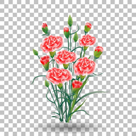 Illustration for red carnation flower, green stem, leaves on transparent background, collection for Mother s Day, victory day, digital draw, vintage illustration, watercolor style, vector - Royalty Free Image