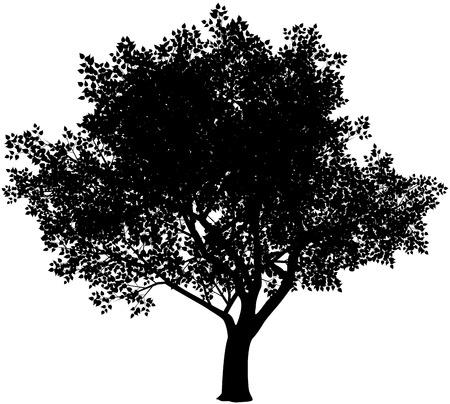 Illustration pour Vector black and white tree silhouette. Eps8. Gradients free - image libre de droit