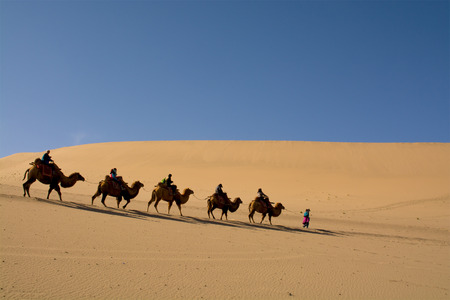 Photo for Camel caravan going through the sand dunes in the Gobi Desert China - Royalty Free Image