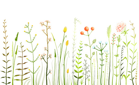Illustration pour Wild Field Flowers and Grass on White Collection - image libre de droit