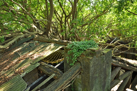 Photo for Anping tree house - Royalty Free Image