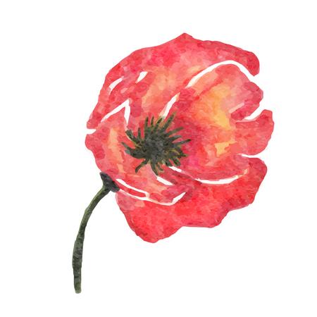 Ilustración de watercolor poppy flower isolated on white background, vector format - Imagen libre de derechos