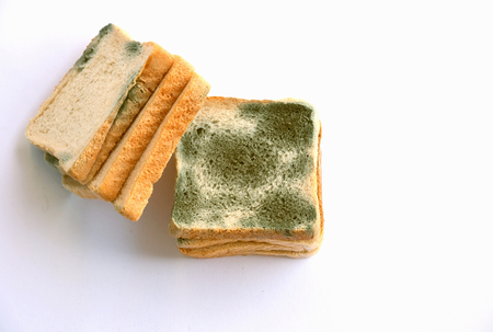 Foto de Mold growing rapidly on moldy bread  on white background. Scientists modify fungus found on bread into an anti-virus chemical. - Imagen libre de derechos
