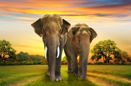 Foto de elephants family on sunset - Imagen libre de derechos