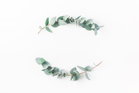 Foto de Eucalyptus on white background. Wreath made of eucalyptus branches. Flat lay, top view, copy space - Imagen libre de derechos