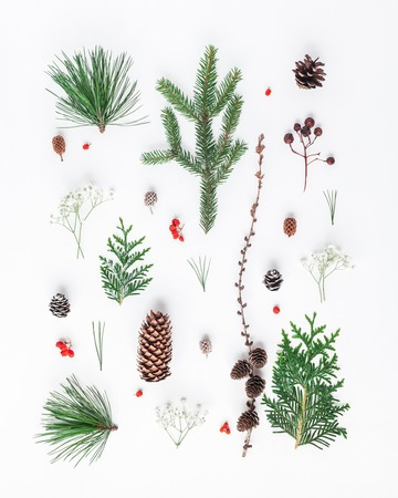 Foto de Christmas composition. Pattern made of different winter plants on white background. Christmas, winter, new year concept. Flat lay, top view - Imagen libre de derechos
