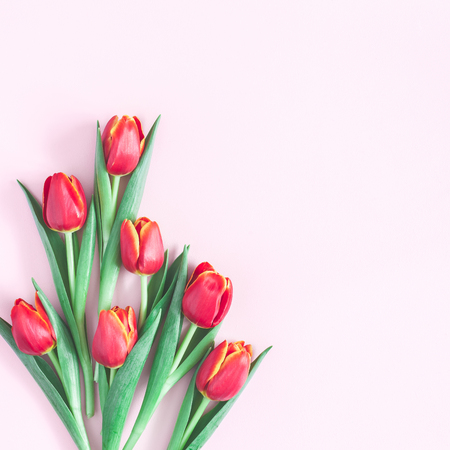 Foto de Flowers composition. Red tulip flowers on pink background. Flat lay, top view, copy space, square - Imagen libre de derechos