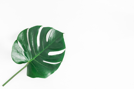Foto de Monstera leaf. Green tropical leaf on white background. Flat lay, top view, copy space - Imagen libre de derechos