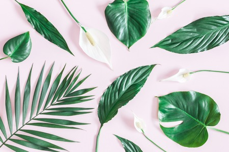 Foto de Summer tropical composition. Green tropical leaves and white flowers on pink background. Summer concept. Flat lay, top view - Imagen libre de derechos