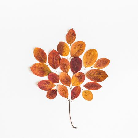 Photo pour Autumn leaf on white background. Flat lay, top view, square - image libre de droit