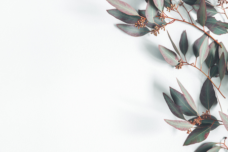 Photo pour Eucalyptus leaves on pastel gray background. Pattern made of eucalyptus branches. Flat lay, top view, copy space - image libre de droit