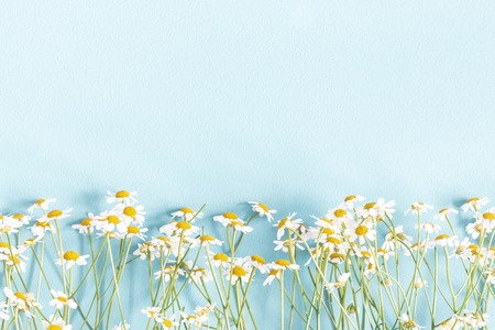 Photo pour Flowers composition. Chamomile flowers on pastel blue background. Spring, summer concept. Flat lay, top view, copy space - image libre de droit
