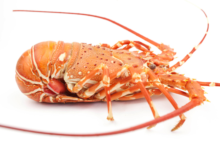 Photo for lobster isolate on white background - Royalty Free Image