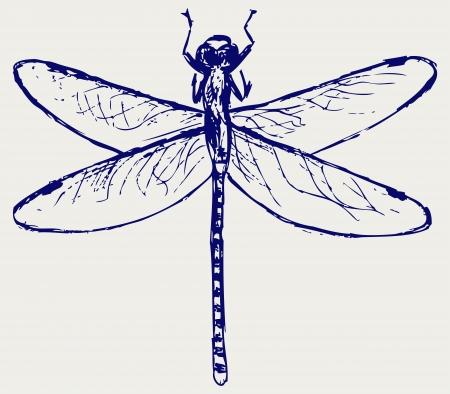 Dragonfly. Sketchy
