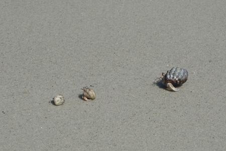Foto de Crab Familia on dusty sand - Imagen libre de derechos