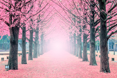 Photo pour Pink tree,Nami Island in Korea - image libre de droit