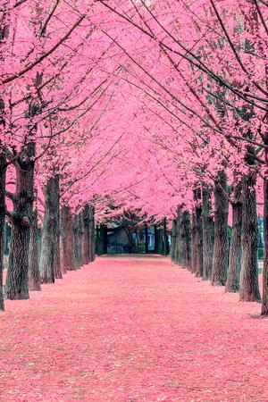 Foto de Pink tree,Nami Island in Korea - Imagen libre de derechos