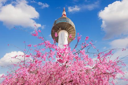 Photo pour Seoul tower and pink cherry Blossom, Sakura season in spring,Seoul in South Korea. - image libre de droit