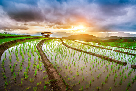 Photo pour Terrace rice field of Ban pa bong piang in Chiangmai, Thailand. - image libre de droit