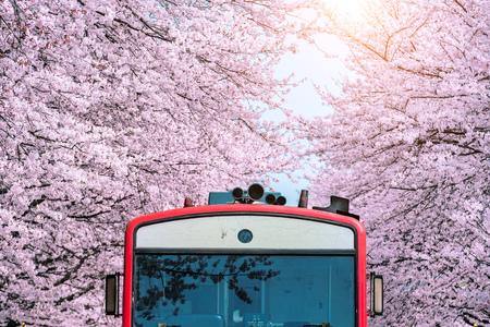 Foto de Cherry blossom or Sakura and trian in spring at Jinhae, South Korea. - Imagen libre de derechos