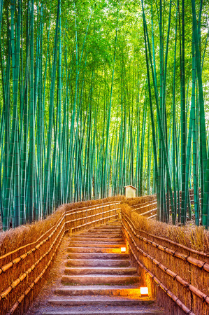 Photo for Bamboo Forest in Kyoto, Japan. - Royalty Free Image
