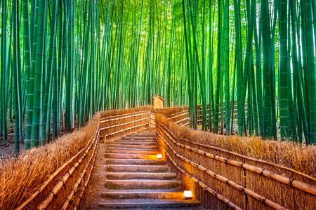 Foto de Bamboo Forest in Kyoto, Japan. - Imagen libre de derechos